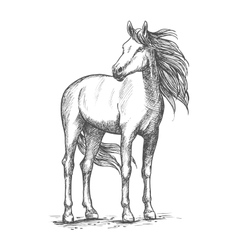 White horse standing with turned head vector