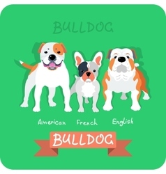 Set 3 bulldogs flat design vector