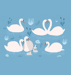 White swan collection on blue background singles vector