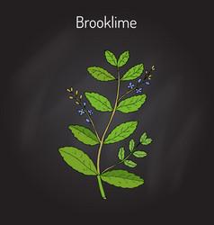 Brooklime veronica beccabunga european speedwell vector