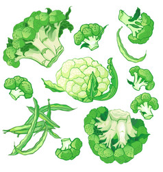 vegetables set with broccoli green string beans vector image