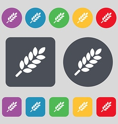 Wheat ears icon sign a set of 12 colored buttons vector