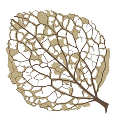 Half-decayed hydrangea leaf vector