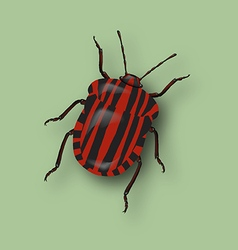 Red beetle vector