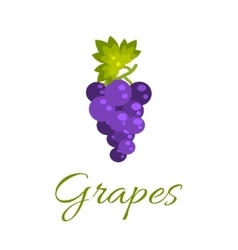 Grapes isolated icon logo concept vector