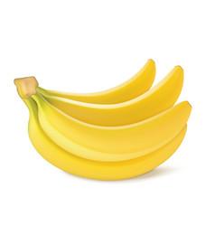 bunch of fresh banana fruits vector image