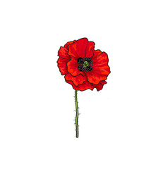 Red poppy flower blossom blooming vector