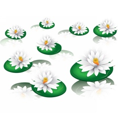White water lilies vector