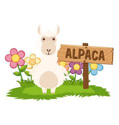 Cute alpaca in garden vector