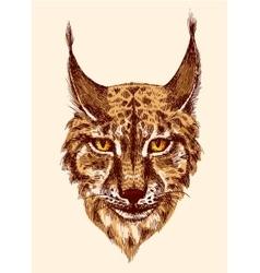 Sketching of lynx vector