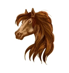 Horse head with long wavy mane vector