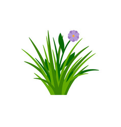 Bush of green grass with flower vector