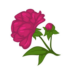 Flower dahlia blossom bud or bloom flat vector