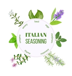 Italian seasoning vector