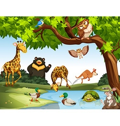 Many wild animals in the park vector
