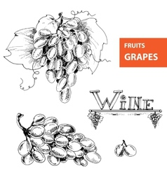 Grapes Set of vector image vector image