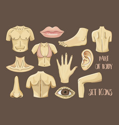 Body parts icons set vector