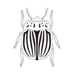 Colorado potato beetle leptinotarsa decemlineata vector