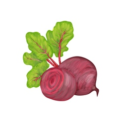 beetroot on white background vector image vector image