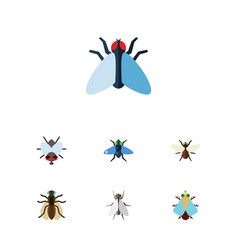 Flat icon fly set of buzz mosquito bluebottle vector