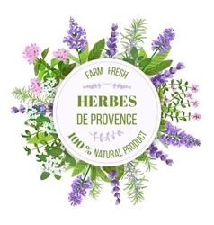 Herbes de provence thyme savory rosemary vector