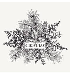 Greeting card with pine branches holly berries and vector