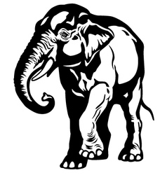 asian elephant black white vector image vector image