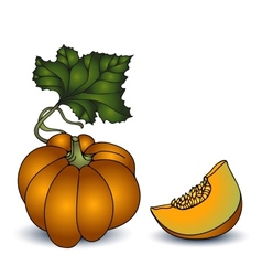 Autumn pumpkin on white background vector