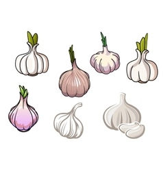 Set of isolated garlic vegetables vector