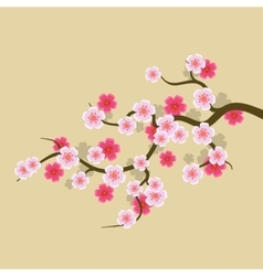 Sakura flowers background cherry blossom vector