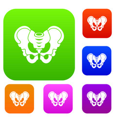 pelvis set collection vector image