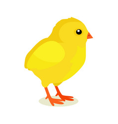 Spring yellow chicken isolated on white background vector