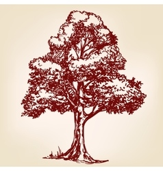 Tree hand drawn llustration sketch vector image