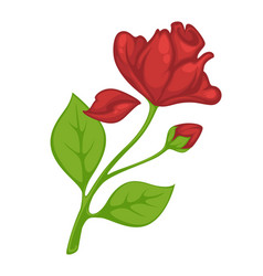 flower rose blossom bud or bloom flat vector image
