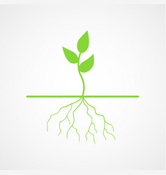 graphic of young tree with root vector image