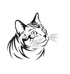 cat on white background pet animal vector image