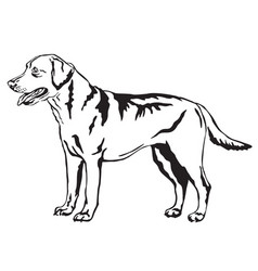 Decorative standing portrait of labrador vector