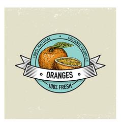 orange vintage hand drawn fresh fruits background vector image