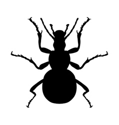 Insect silhouette sticker ground beetle bug vector