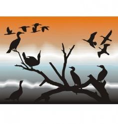 cormorants vector image