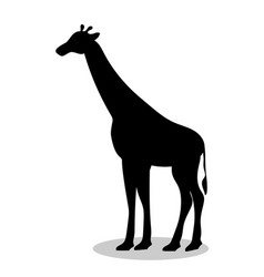 giraffe mammal black silhouette animal vector image