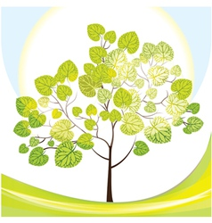 Tree with green leaves sunny day vector