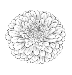 Black and white flower isolated vector