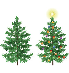Christmas spruce fir trees with ornaments vector