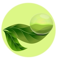 Rain drop of clear water on a leaf vector image