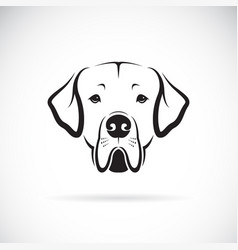 dreat dane dog head on white background pet vector image vector image
