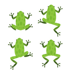 Set of green frog in flat style with pattern vector