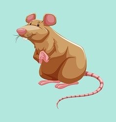 Brown rat standing alone vector