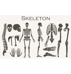 Human bones skeleton silhouette collection set vector
