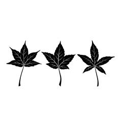Liquidambar Styraciflua Leaves vector image vector image